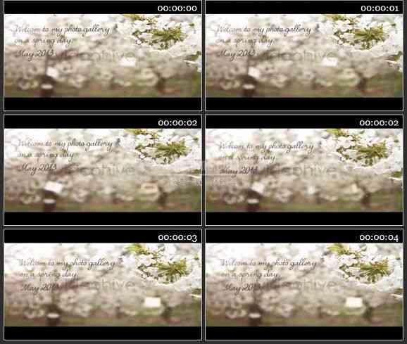 AE1484-实景桃花 图文展示