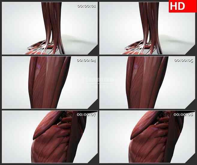 BG0853-三维模型人体肌肉高清动画视频素材