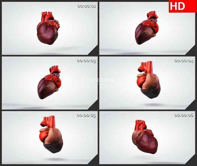 BG0912-三维人体心脏模型高清动画视频素材