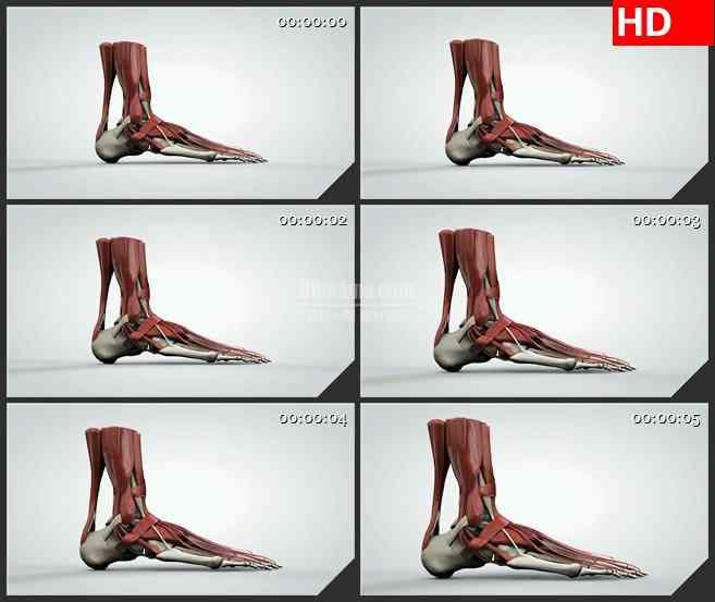 BG1017-人体脚部肌肉骨骼三维解剖模型动画高清视频素材