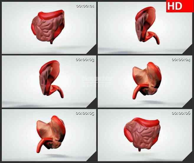 BG1021-三维动画模型肠道大肠小肠旋转生物医疗高清视频素材