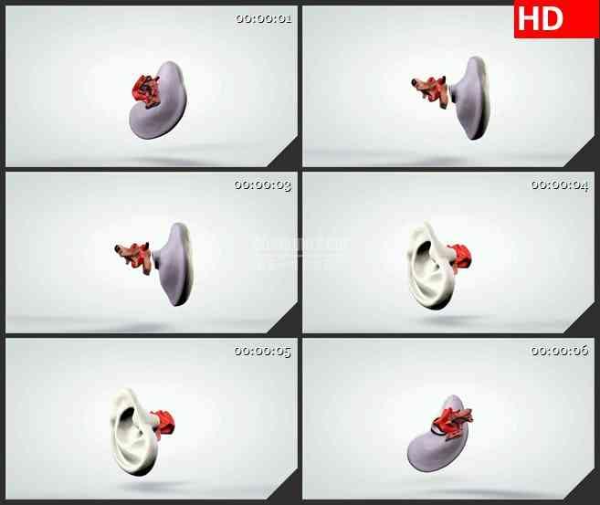 BG1022-三维动画模型的人耳听觉系统生物医疗高清视频素材