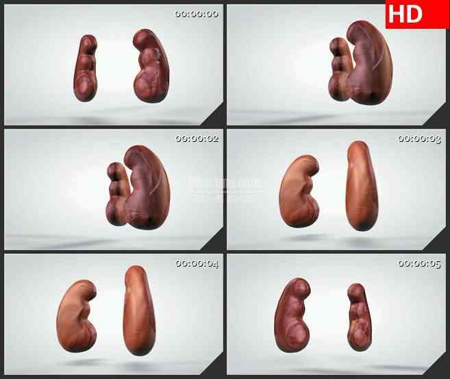 BG1027-三维动画模型旋转人体肾脏生物医疗高清视频素材