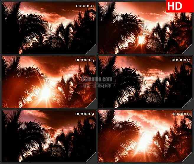BG1389橙色阳光天空云彩棕榈树树叶动态LED高清视频背景素材