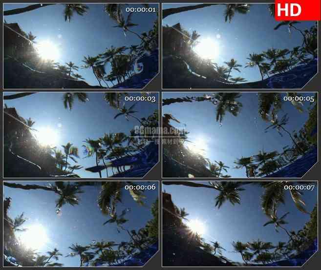 BG1505水中的倒影热带树木棕榈树led背景大屏高清视频素2