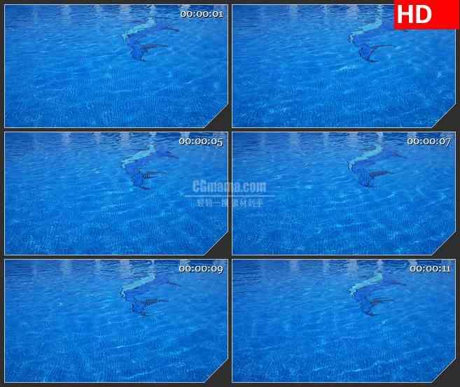 BG1560游泳池蓝色水波池底海豚马赛克动态LED高清视频背景素材