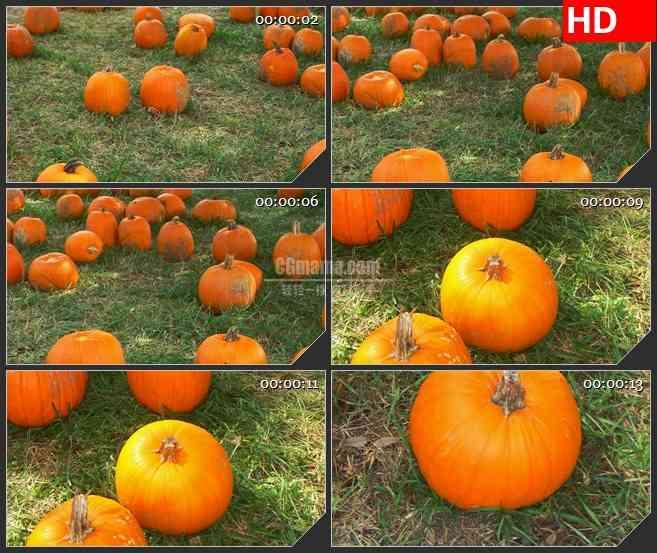 BG2587草地南瓜镜头转换高清led大屏视频背景素材