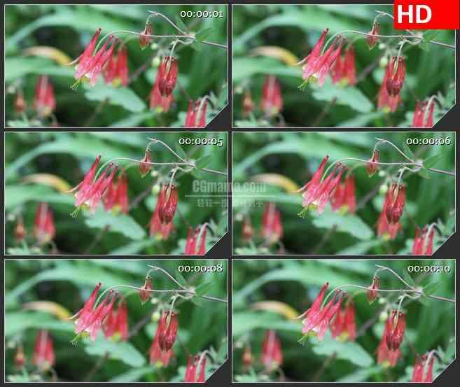 BG2739密苏里野生花卉绿叶高清led大屏视频背景素材