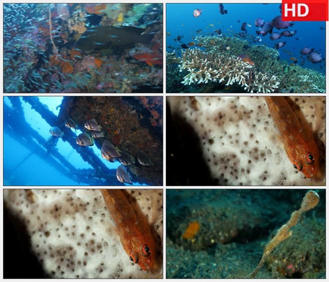 ZY1345蓝色海底珊瑚鱼群海马高清实拍视频素材