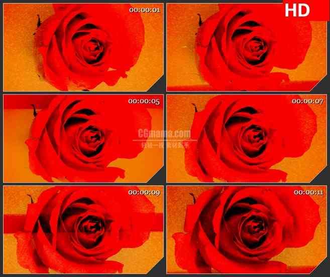BG2776扫描红玫瑰旋转盛开高清led大屏视频背景素材