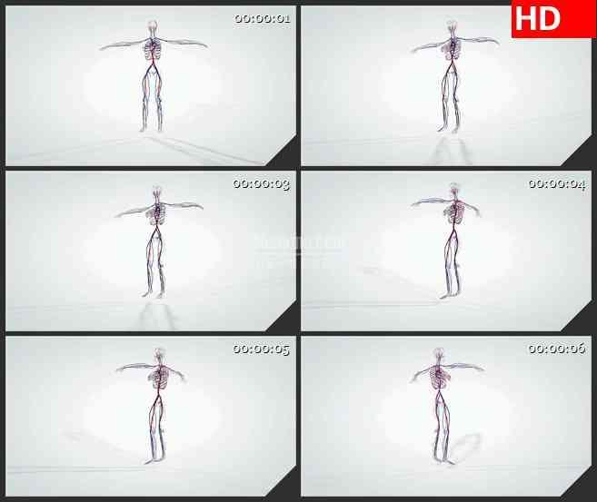 BG2821旋转的三维解剖模型人体循环系统高清led大屏视频背景素材
