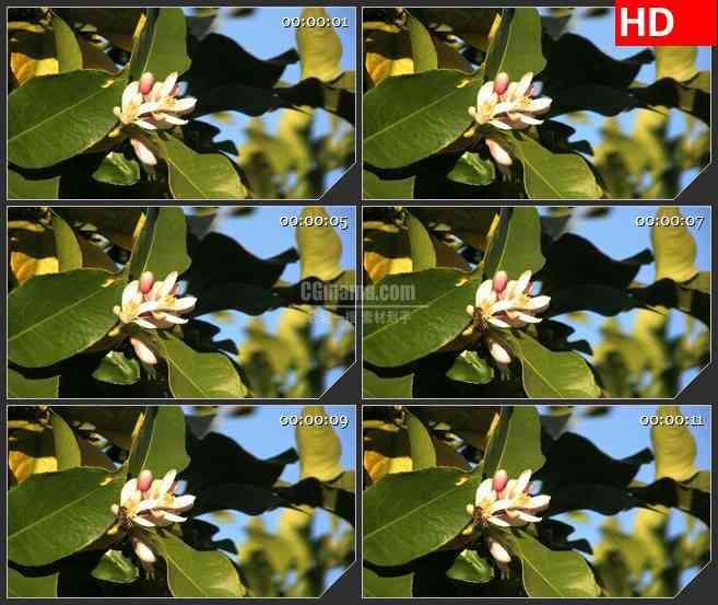BG3046微观景象 采蜜的蜜蜂高清led大屏视频背景素材