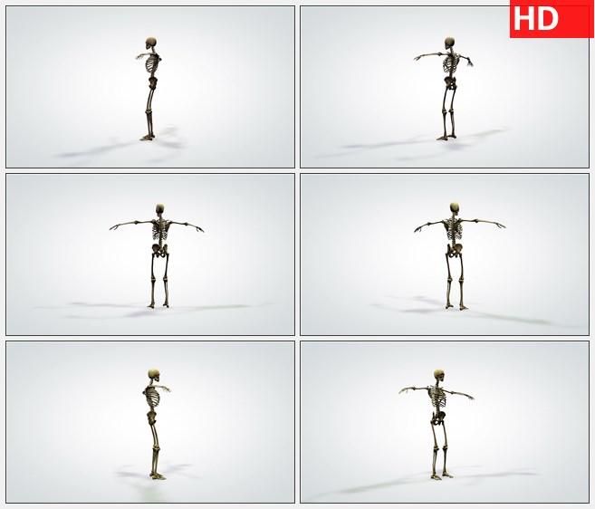 ZY1520暗黄色人类骨骼的三维模型的旋转高清实拍视频素材