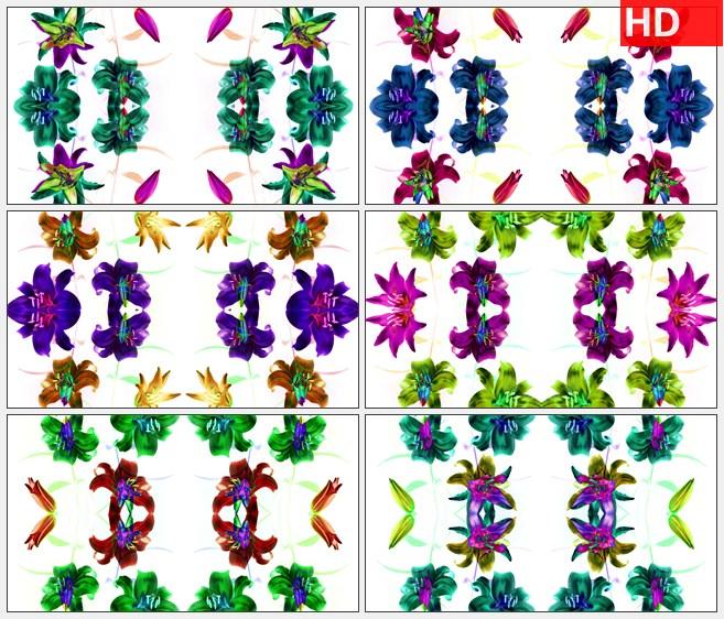 ZY1530白色背景鲜花开放花朵led大屏高清视频背景素材高清实拍视频素材
