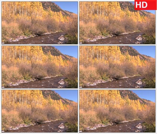 ZY1688秋天河水穿过白杨林山丘高清实拍视频素材
