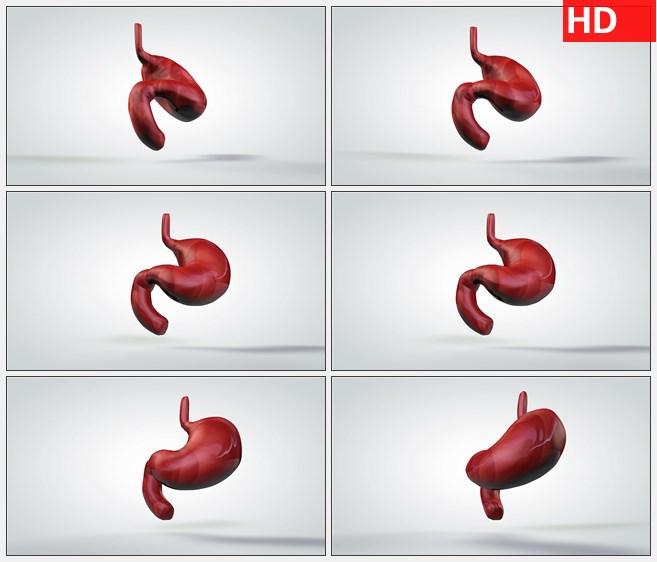 ZY1704三维动画模型缓慢旋转人体胃高清实拍视频素材