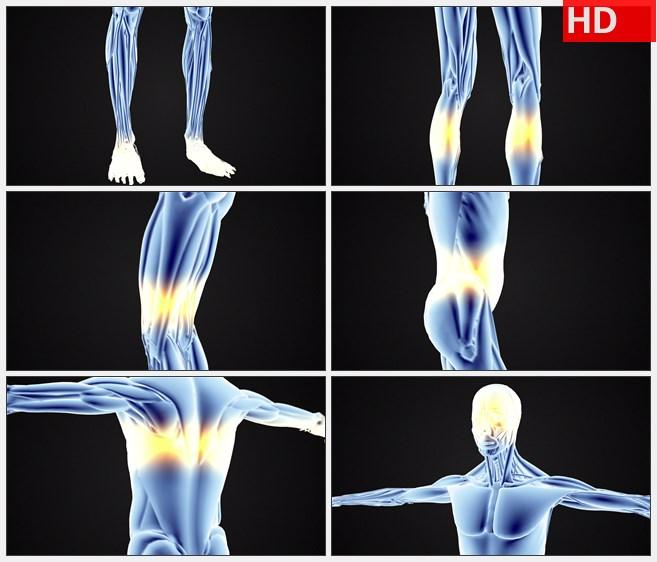 ZY1718三维模型的人体解剖学扫描旋转自下而上高清实拍视频素材