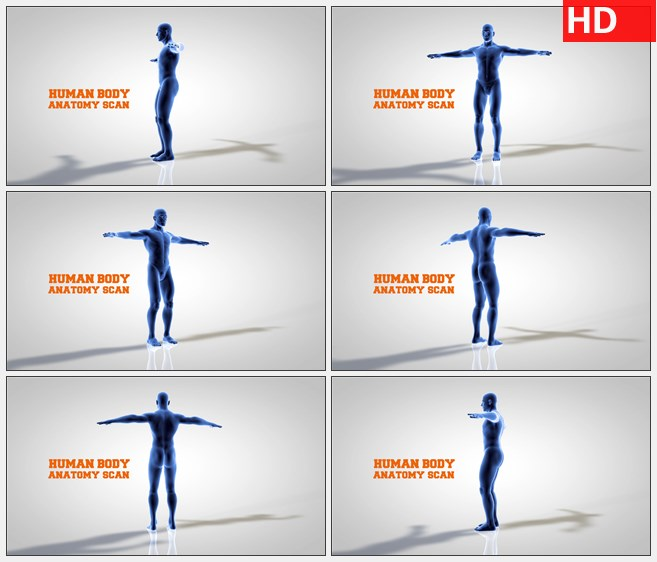 ZY1719三维模型的旋转人体解剖扫描高清实拍视频素材