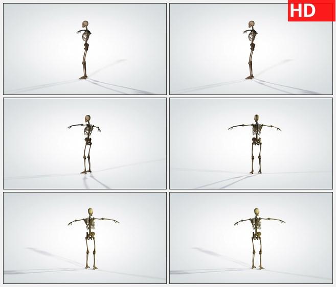 ZY1725三维旋转解剖模型人体骨骼高清实拍视频素材