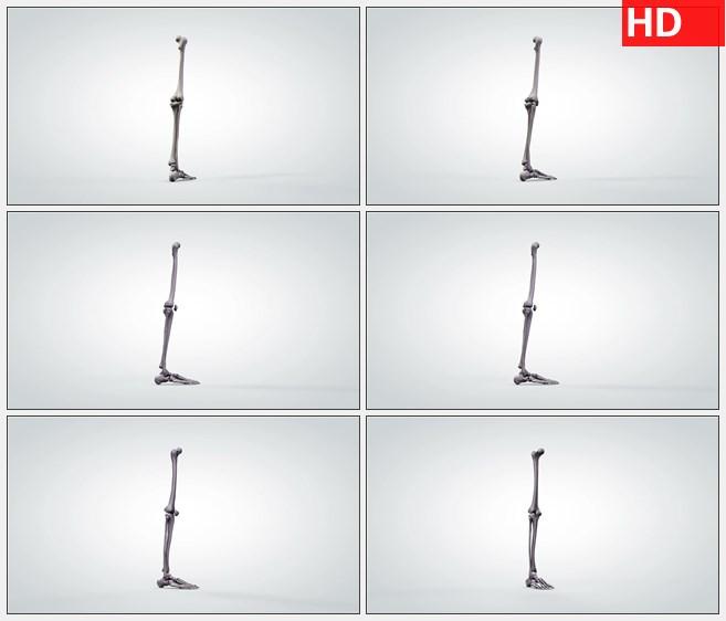 ZY1731三维旋转人体腿部骨骼解剖模型高清实拍视频素材