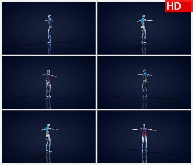 ZY1732三维渲染人体内旋转高清实拍视频素材