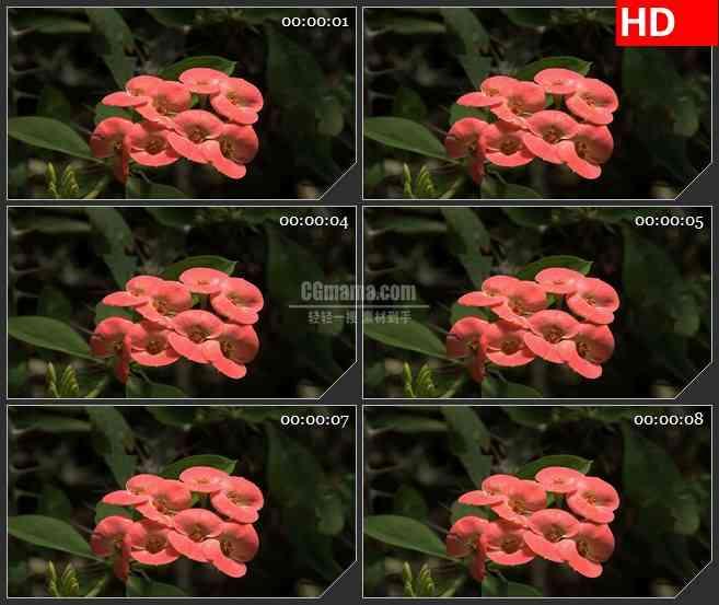 BG3811微观世界 自然实景 鲜花led大屏背景高清视频素材