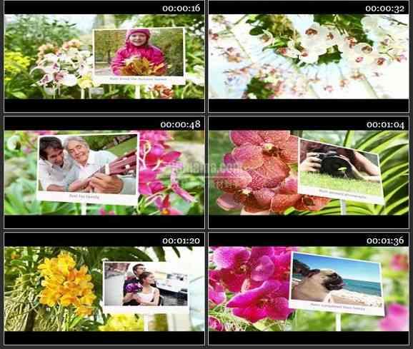 AE2312-阳光明媚的花朵 相册