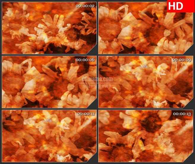 BG3968橙黄色向日葵太阳花led大屏背景高清视频素材